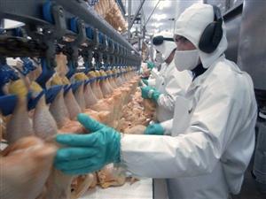 [Rumani] Tuyển Nam Nữ chế biến thịt gà thi tuyển ngày 8.9.2017