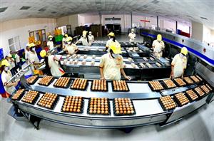 [Nhật Bản] Cần gấp nữ phân loại trứng gà Tỉnh Okayama