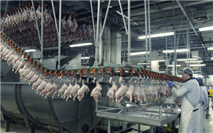 [Hungary] Tuyển Nam Nữ Thực phẩm lương 25 triệu
