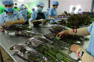 [Nhật Bản] Cần gấp Nữ nông nghiệp đóng gói rau củ quả lương 28 triệu