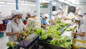[Nhật Bản] Tuyển 3 nữ nông nghiệp đóng gói rau củ quả